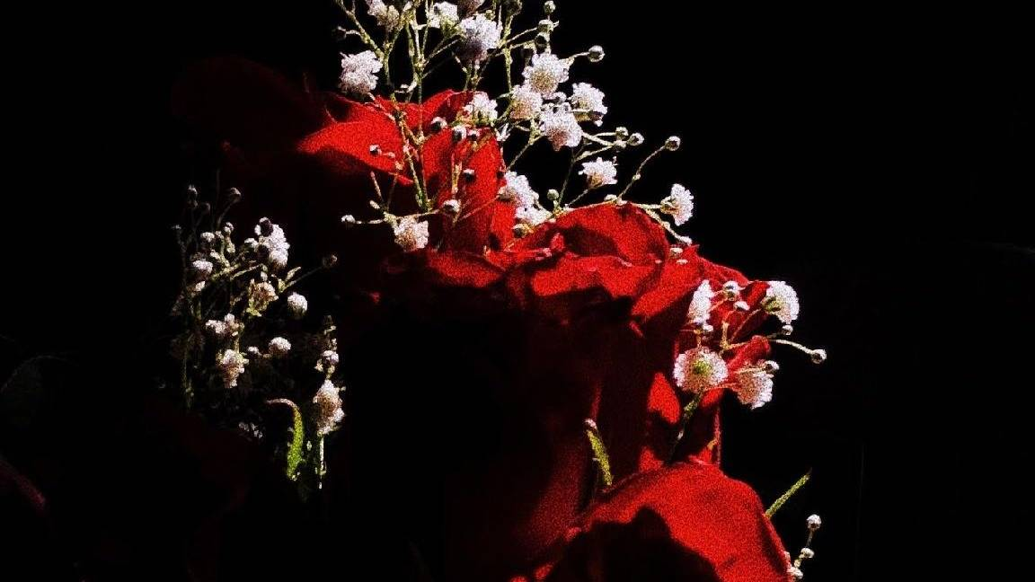 flowers on red surface